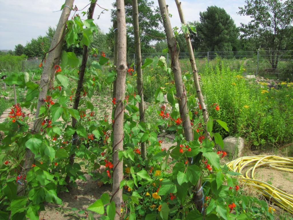 Ein platz zum wurzeln schlagen der interkulturelle for Berlin pflanzen